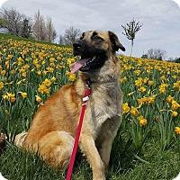 Adopt A Pet :: Murray - Enfield, CT