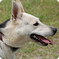 Adopt A Pet :: Hope - Preston, CT