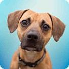 Adopt A Pet :: ZEEKY