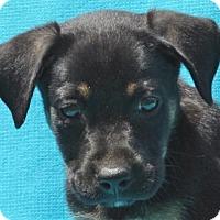 Adopt A Pet :: **REED** - Mukwonago, WI