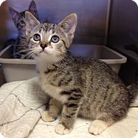 Adopt A Pet :: H-6 female - Triadelphia, WV