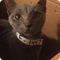 Adopt A Pet :: Skye - Palisades Park, NJ