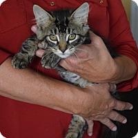Adopt A Pet :: Abott - Surrey, BC