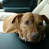 Adopt A Pet :: Casey - Pembroke, GA