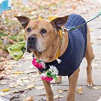 Adopt A Pet :: Betty - Grand Rapids, MI