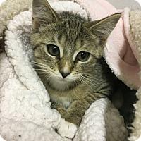 Adopt A Pet :: Ian - Toledo, OH