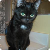 Adopt A Pet :: Mini-Max -Adoption Pending - Arlington, VA
