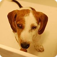 Adopt A Pet :: Ray Charles - Sawyer, ND