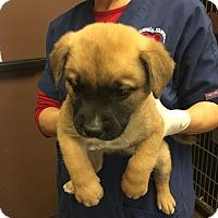 Adopt A Pet :: Slider - Vancouver, BC