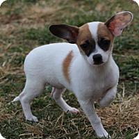 Adopt A Pet :: Jack - king cutie! - Columbia, MD
