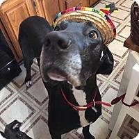 Adopt A Pet :: Hazel - Baden, PA