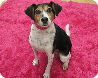 Beagle Mix Dog for adoption in High Point, North Carolina - Doris