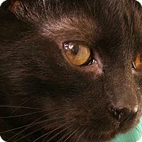Adopt A Pet :: Hughes VALENTINE'S SPECIAL! 50 - Republic, WA
