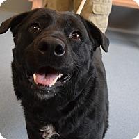 Adopt A Pet :: Jodi - Bay Shore, NY