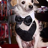 Adopt A Pet :: London - Orange, CA