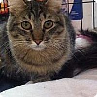Adopt A Pet :: Carter - Modesto, CA