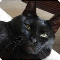 Adopt A Pet :: Duke (CK) - Little Falls, NJ