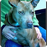 Adopt A Pet :: Bacchus - PENDING - kennebunkport, ME