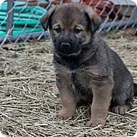 Adopt A Pet :: Linos - St Louis, MO
