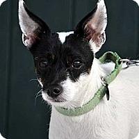Adopt A Pet :: Shylene - Rhinebeck, NY