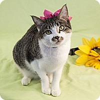 Adopt A Pet :: Barbie - Green Bay, WI