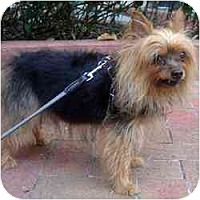 Adopt A Pet :: Wrigley - Miami, FL