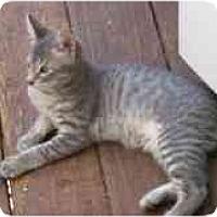 Adopt A Pet :: Bernard - Davis, CA