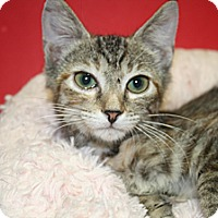 Adopt A Pet :: ZIVA - SILVER SPRING, MD