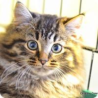 Adopt A Pet :: Rego - Island Park, NY