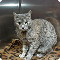 Adopt A Pet :: Allie - Schererville, IN
