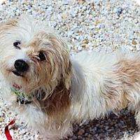 Adopt A Pet :: Greta Garbo - Smyrna, GA
