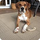 Adopt A Pet :: Dillon