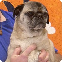 Adopt A Pet :: Rocky - Columbiana, AL