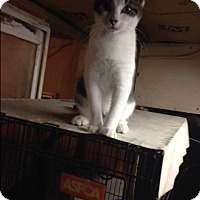 Adopt A Pet :: Odie - Morriston, FL