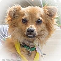 Adopt A Pet :: Boy - Loudonville, NY