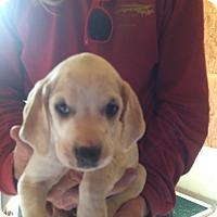 Adopt A Pet :: Leila - Hohenwald, TN