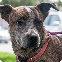 Adopt A Pet :: Mellie - Gainesville, FL
