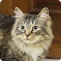 Adopt A Pet :: Pi - ADOPTION PENDING! - Potomac, MD