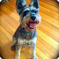 Adopt A Pet :: Willis~~ADOPTION PENDING - Sharonville, OH