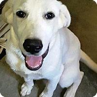 Adopt A Pet :: Marley - Oswego, IL