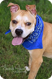 Pit Bull Terrier Mix Dog for adoption in Pilot Point, Texas - DELTA