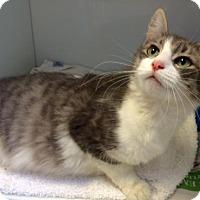 Adopt A Pet :: Abuna - Herndon, VA