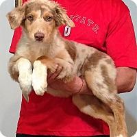 Adopt A Pet :: Chandler - South Euclid, OH
