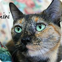 Adopt A Pet :: Gemini - Wichita Falls, TX