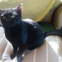 Adopt A Pet :: Jerky - Wakefield, MA