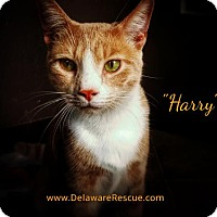 Adopt A Pet :: Harry - Seaford, DE
