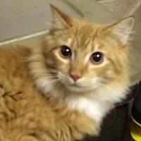 Adopt A Pet :: Scamp - Magnolia, AR