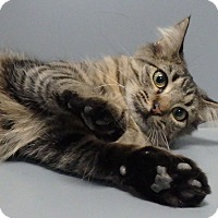 Adopt A Pet :: Libby - Seguin, TX