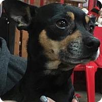 Adopt A Pet :: Roscoe - Centerville, GA