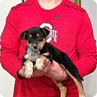 Adopt A Pet :: Rocky - Gahanna, OH